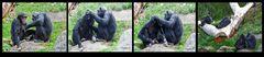 Zoom Gelsenkirchen - Szene im Affenpark
