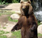 Zoopark Hagenbeck #11
