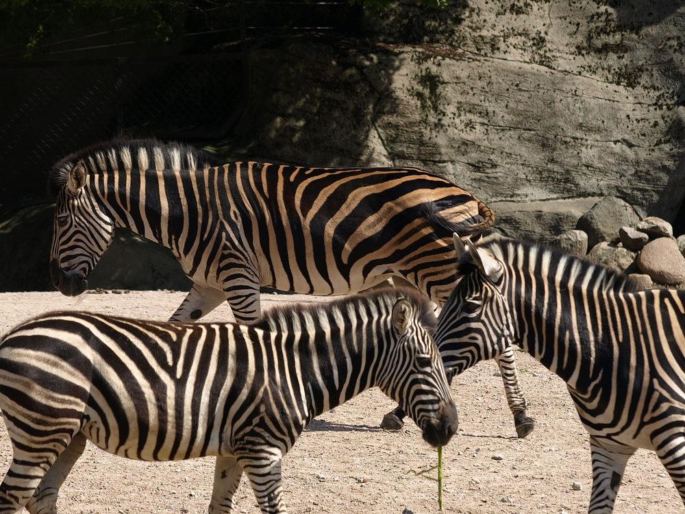 Zoopark Hagenbeck #12