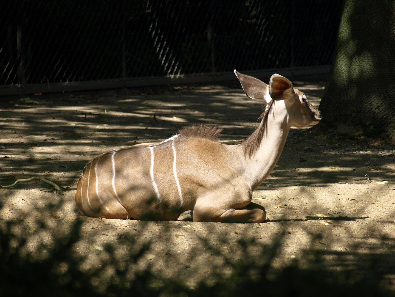 Zoopark Hagenbeck #13