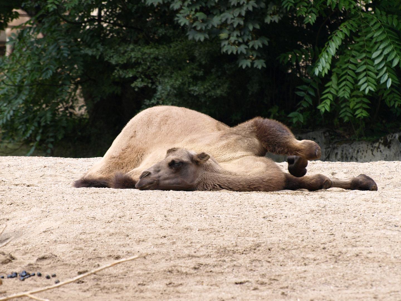 Zoopark Hagenbeck #15