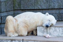 Zoo_Wuppertal #1