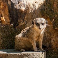 Zoo_Wuppertal #5