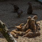 Zoo_Zoom Erlebniswelt16