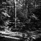 Zorki Schönbuch oder Waldneuigkeiten