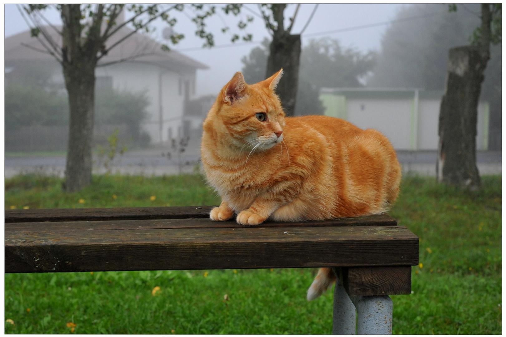 Zorrito, está esperándome en el campo de deportes
