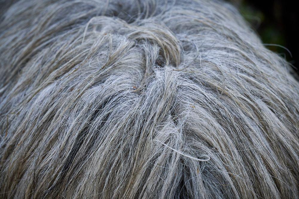 Zottelige Haarpracht