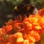 Zu Besuch im orangefarbenen Blütenbett