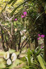 Zu Besuch in einem vietnamesischen Garten