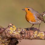 """Zu Ehren des """"Vogel des Jahres""""...."""