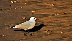 Zu Fuß über Sand und Stein