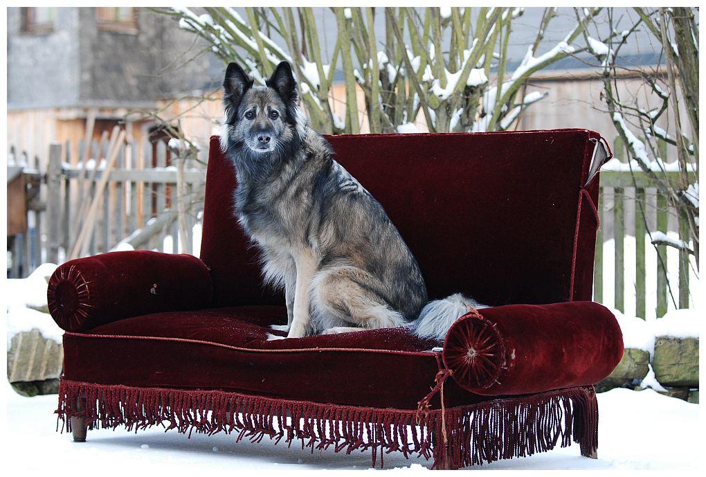 Zu Gast Auf Dem Roten Sofa Foto Bild Tiere Haustiere Hunde