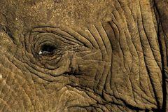 Zu nah am Elefant