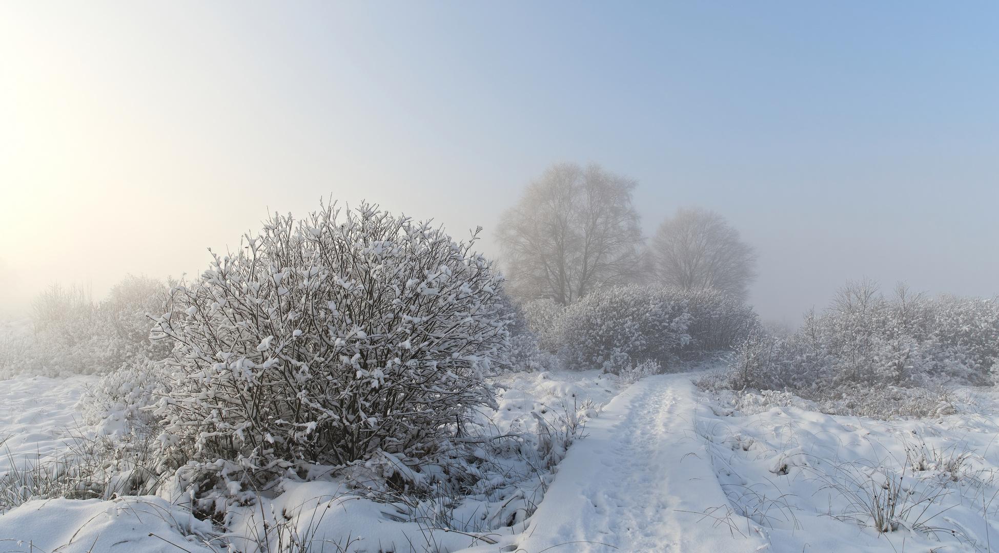 Zu Weihnachten: Licht auf all Euren Wegen! Foto & Bild   landschaft ...
