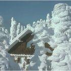 Zuckerwattenbäume (Dreisessel Diensthütte)