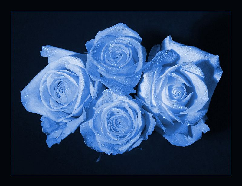 zufällig blau und zufällig vier