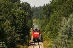 Zug aus dem Urwald