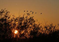 Zugvögel an der Elbe