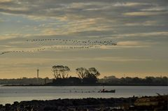 Zugvögel....