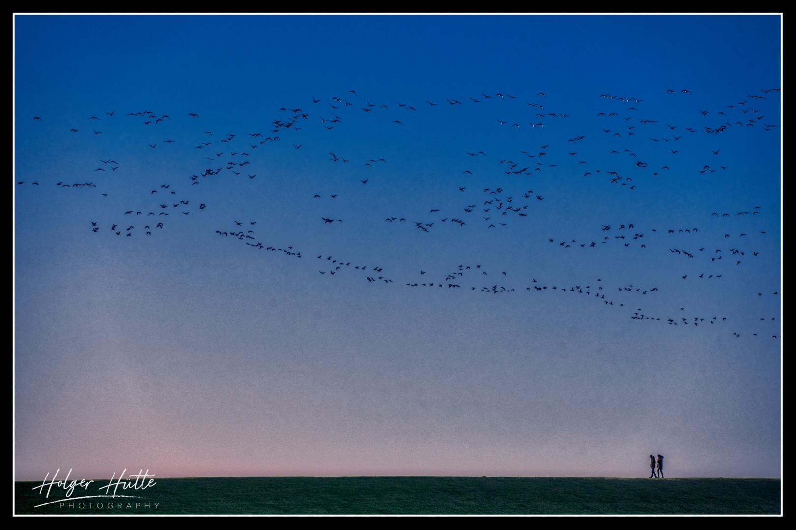 Zugvögel - Herbst an der Nordsee