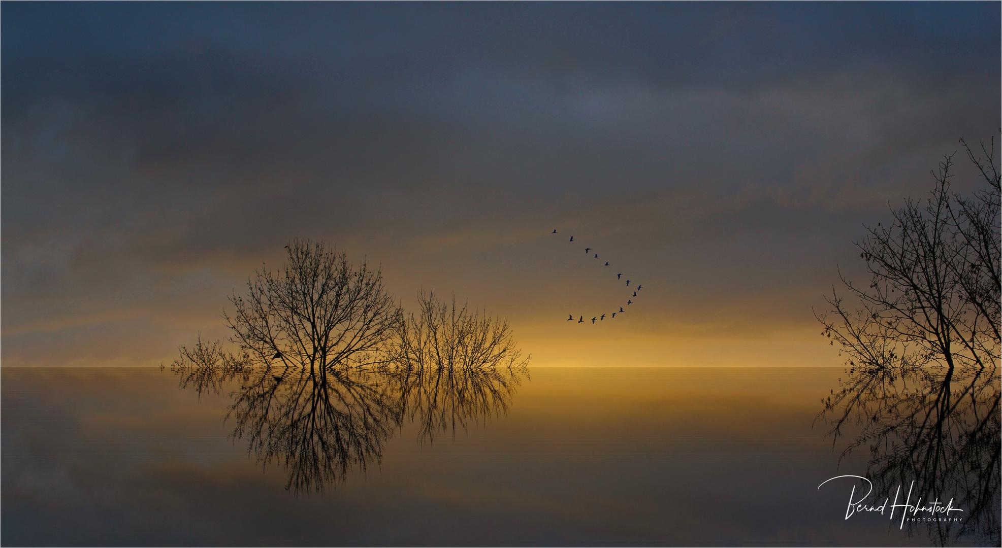 Zugvögel .... zum Sonnenaufgang