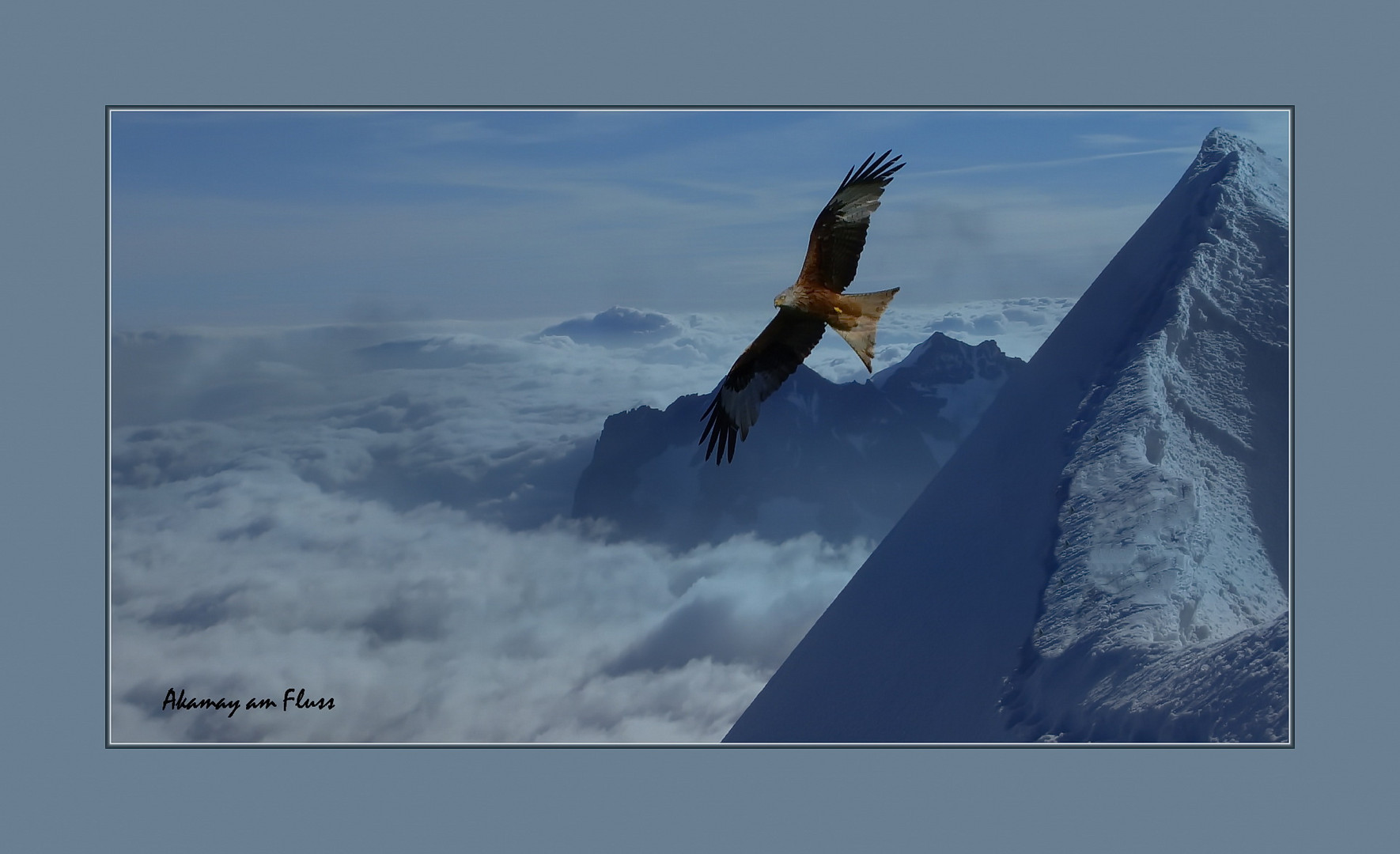 Zugvogel Rotmilan