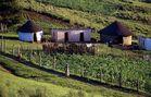 Zulu Hütten