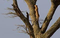 Zum Bäumehochklettern