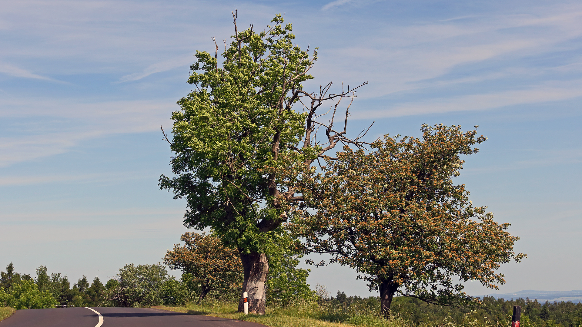 Zum ersten mal meinen Lieblingsbaum oben im Gebirge aus Süden gezeigt