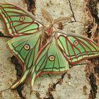 """Zum Film : """"Der Schmetterling - Le Papillon"""""""