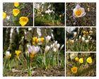 zum Frühlingsbeginn