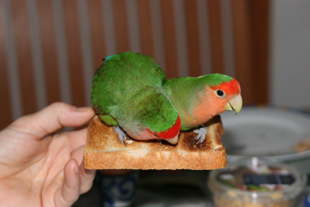 zum Frühstück erst mal ´n Toast