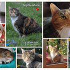 Zum Gedenken an Sophie-Marie
