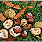 Zum Herbst gehören KASTANIEN: