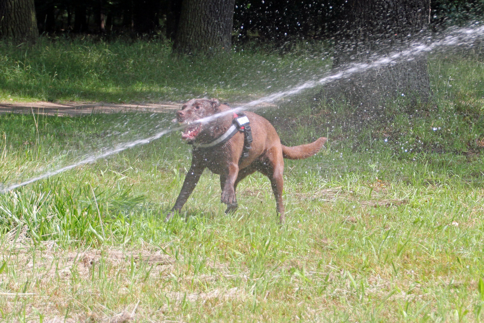 """Zum heutigen Aktionstag """"Kollege Hund"""" / 3"""