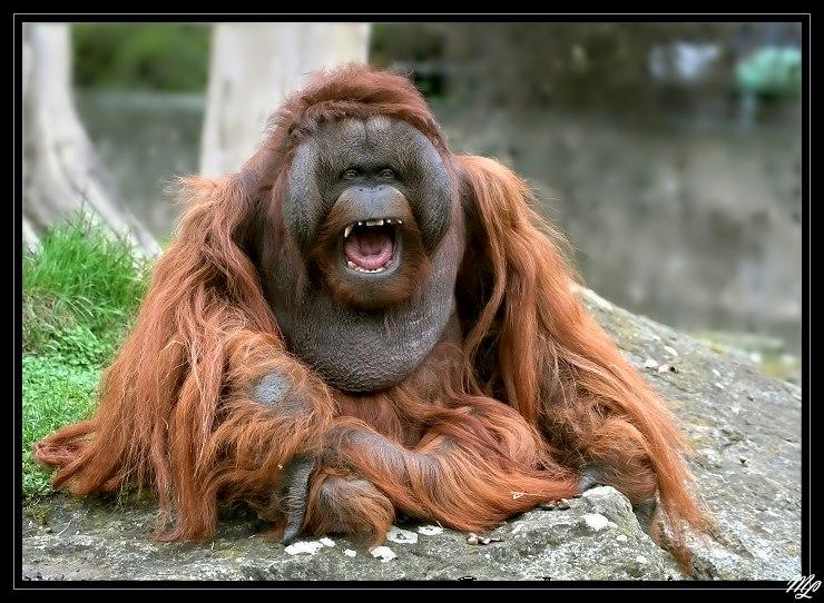 Zum Kaputtlachenda Sind Wieder Die Fcler Foto Bild Tiere