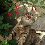 zum Katzenwelttag