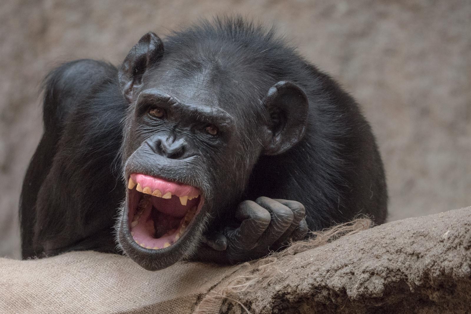 Zum Lachen Foto & Bild | tiere, zoo, natur Bilder auf