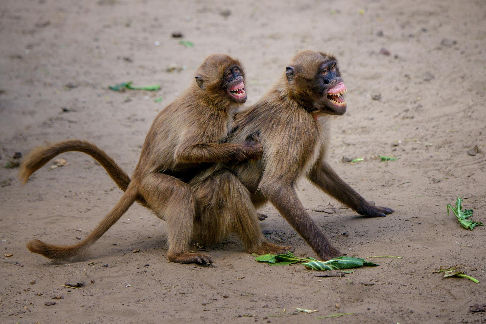 Zum Lachen Foto Bild Natur Tiere Säugetiere Bilder Auf