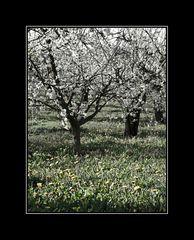 ... (zum Letzten) der letzte Frühling ...