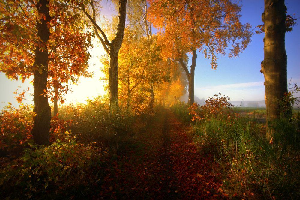 Zum Märchenwald von Kronach