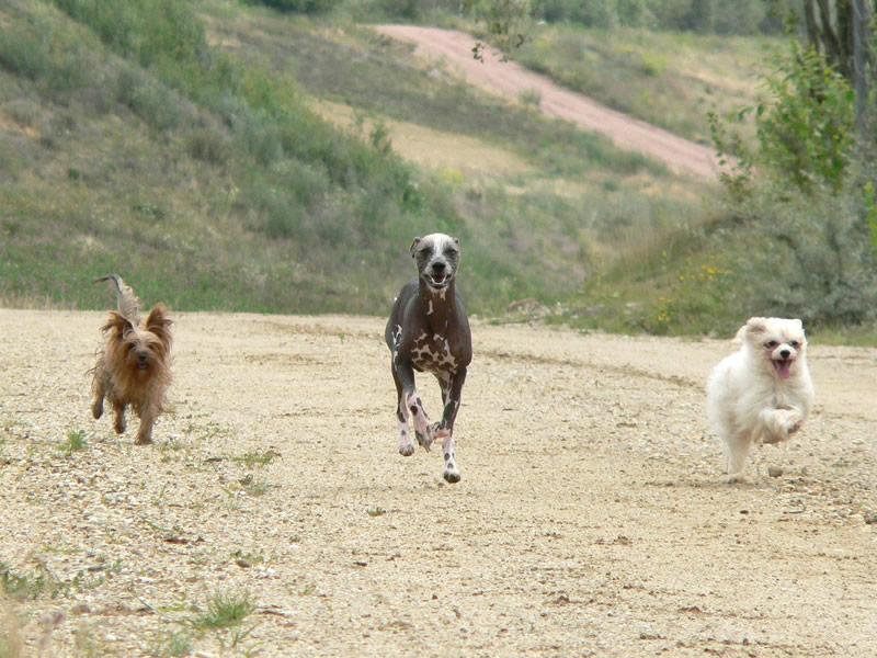 ***zum rennen...***