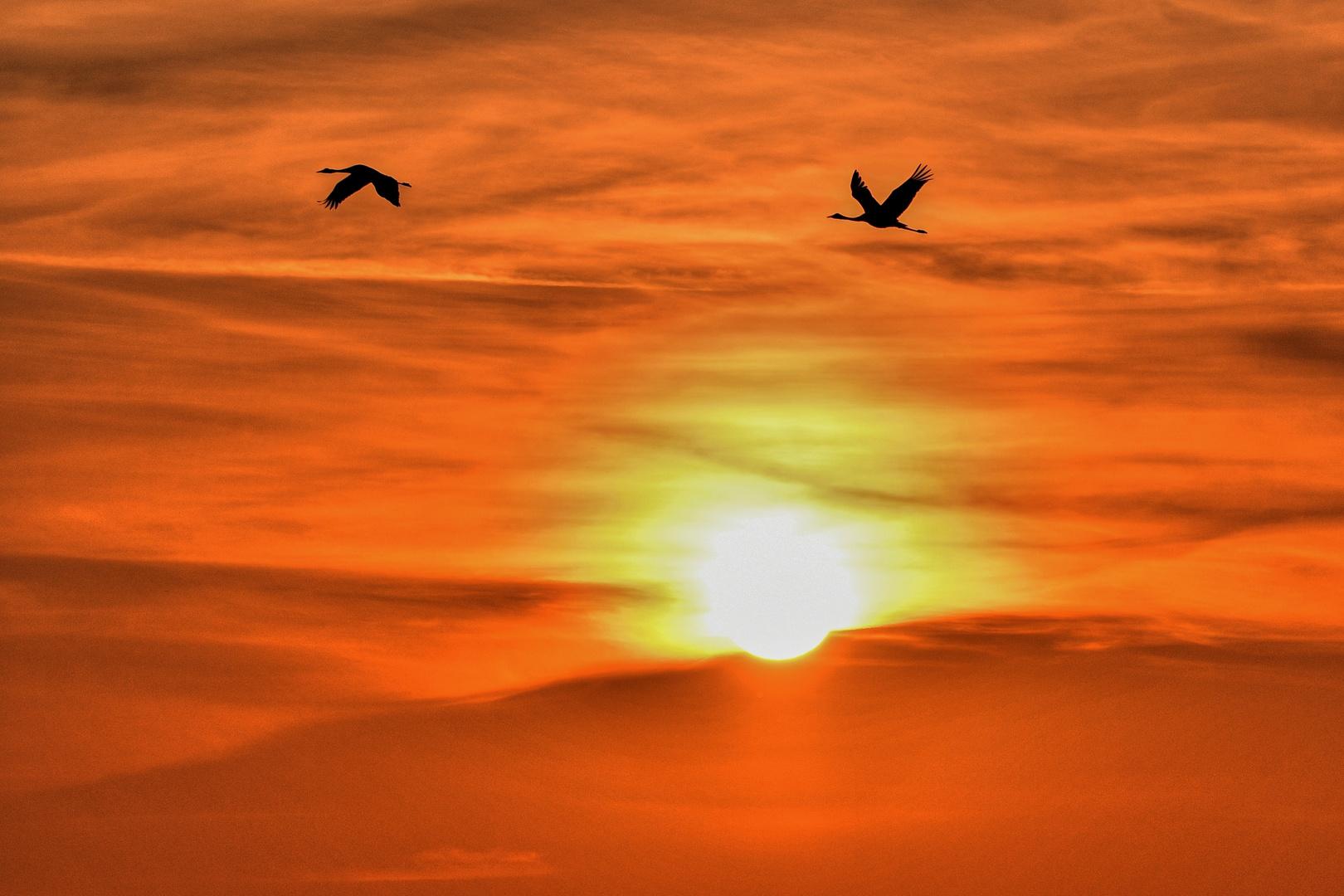 Zum Sonnenaufgang am See