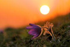 zum Sonnenuntergang....