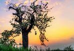 Zum Tag des Baumes