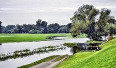 zum Teil überflutete Wiesen