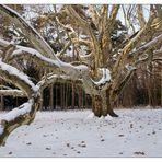 Zum Thema: *Bäume im Winterkleid*