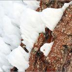 .... zum Thema: Bäume im Winterkleid ...