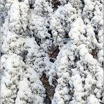 ... zum Thema: Bäume im Winterkleid ...