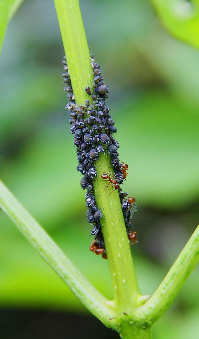 """Zum Thema """"Ein Herz für Insekten"""""""